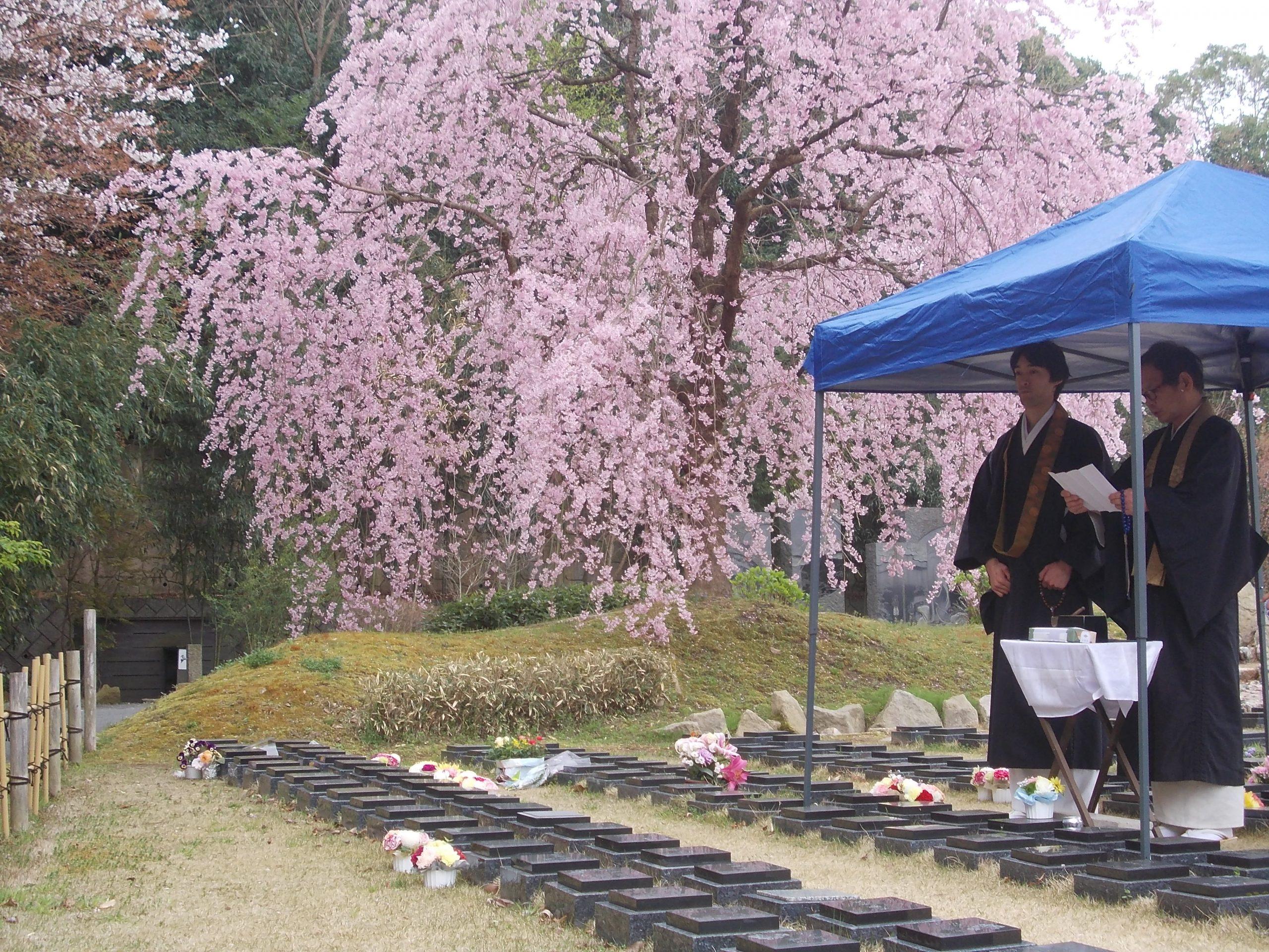 桜の木の下で納骨法要